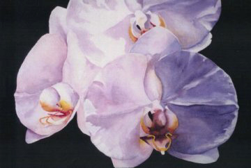 Orchids by Mary Blumberg